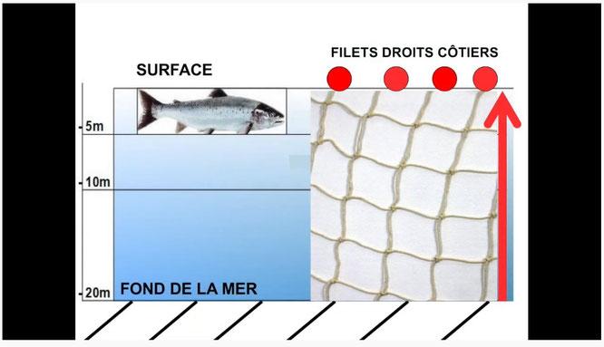Nous le savons, le saumon est en grand danger, Salmo Tierra, Sepanso64, ACCOB luttent pour sa sauvegarder avec aussi l'ADRM qui diffuse une super vidéo.
