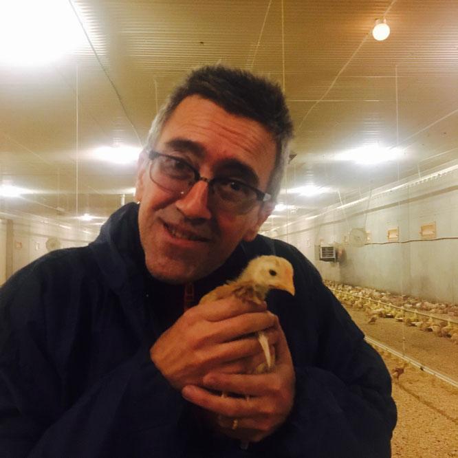 kylling rase ross lerstang dyrevelferd