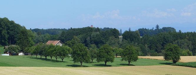 """der """"Blick zurück"""" von Büren auf dem Seerücken auf den Napoleonturm"""