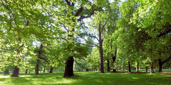 Lebensräume schützen - biologischen Vielfalt fördern - Umweltbedingungen wie saubere Luft, klares Wasser und gesunde Böden verbessern - nachhaltig Wirtschaften für faire Produkte und gesunde Lebensmittel.