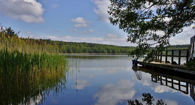 Urlaub in Brandenburg - Bikowsee  - fluegelwesen.de