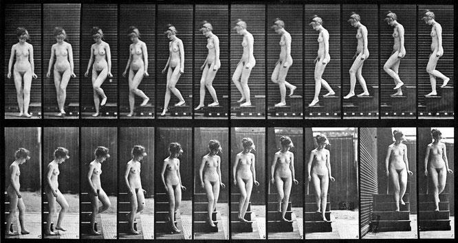 エドワード・マイブリッジ「階段を降りる女性」(1887年)。デュシャンが影響を受けているのはこちらのほう。