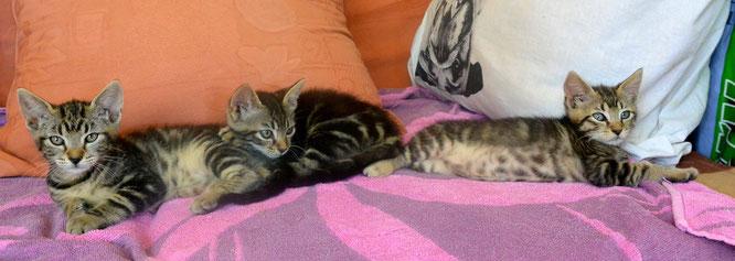 Léonie, Léon (adopté) et Little Tail (adopté)