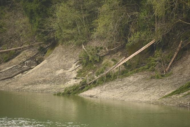 ダム周辺の森林は放置された状態。