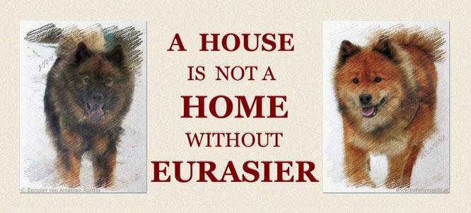 """... unsere Eurasierhündinnen Ylvi und Ronja (beide stammen aus Schweden, Kennel """"Balder-Balder"""")"""