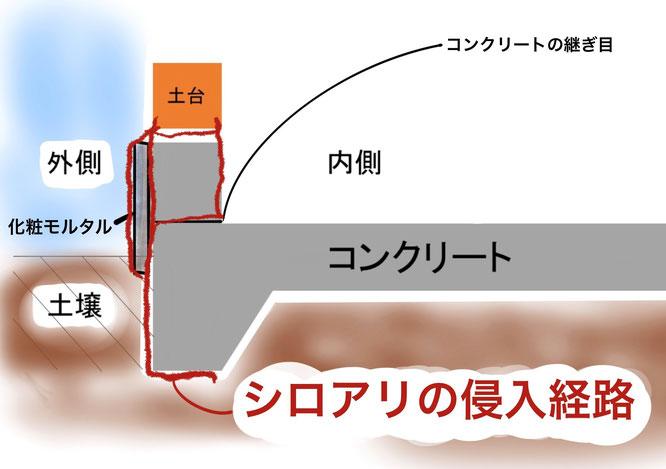 ベタ基礎工法におけるシロアリの侵入経路 断面図