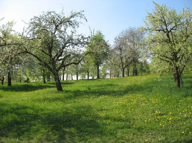 Streuobstwiese (Quelle: Bilddatenbank NABU, Hannes Huber)
