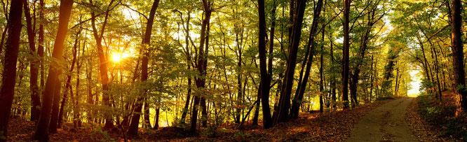 Heterogener Laubmischwald (Quelle: pixabay, Quadronet)
