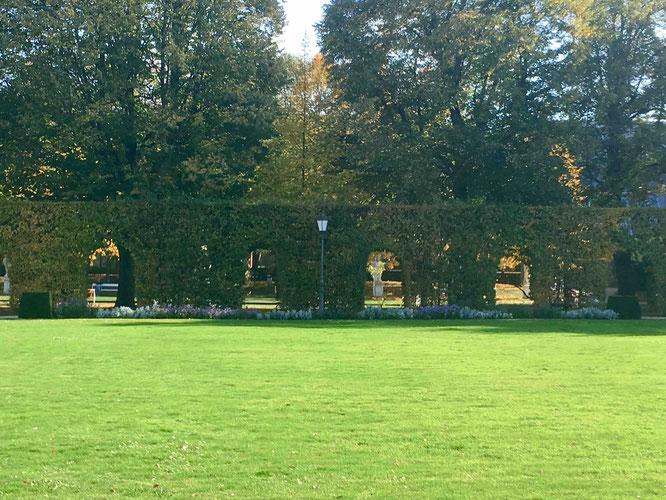 Schön grün ist es im Palastgarten des Kurfürstlichen Palais.