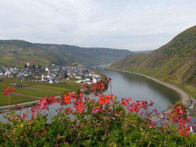In meinem nächsten Leben werde ich Geranien-Verkäuferin an der Mosel. Sogar auf der Burg Metternich kommt man nicht an diesen Blumen vorbei.