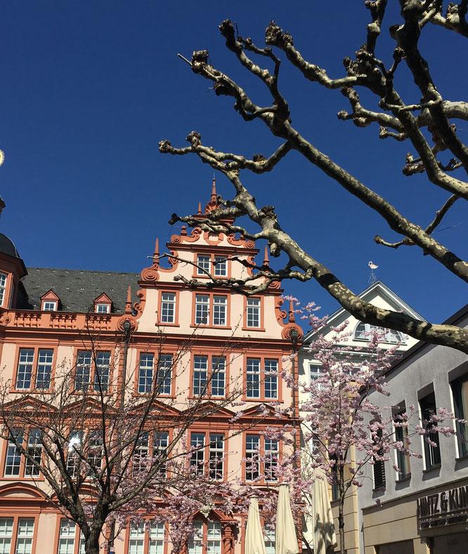 Frühlingserwachen in Mainz
