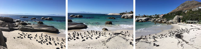Boulders Beach, Simon's Town, Western Cape...