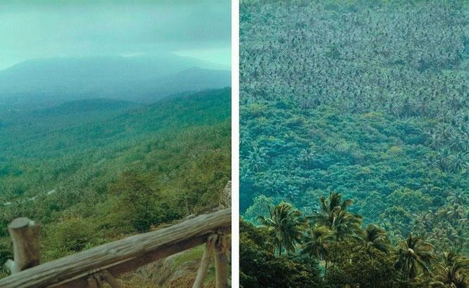 Neblig verhüllte Hügelketten (links) und Palm(en)vegetation, soweit das Auge reicht (rechts) - nordöstlich der Cameron Highlands...