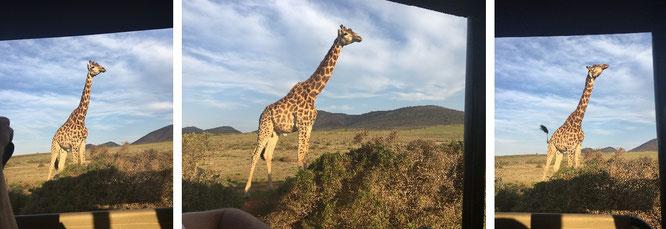 Aus dem fahrenden Vehikel: Im ehemaligen Deutsch-Südwestafrika/Namibia (22° 34′ 12″ S, 17° 5′ 1″ E)...