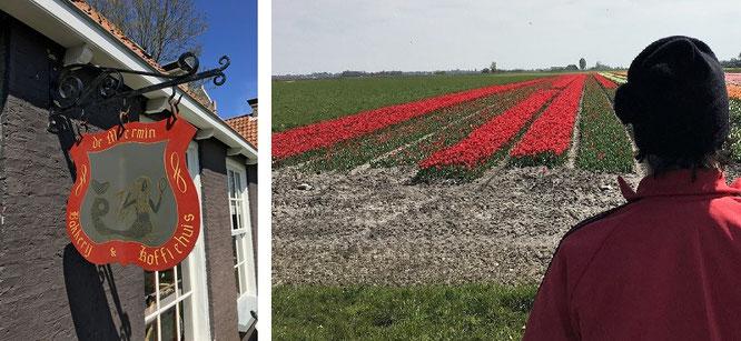 Auch das: vor den Stadttoren Hindeloopens empfangen Euch holländische Tulpen (MM - also Ende März bis Mitte Mai)...