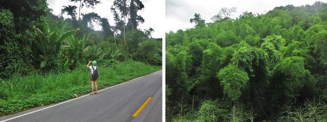 Je näher Ihr Euch Pala U nähert, desto dichter der Pflanzenbewuchs. Eindrucksvolle Fauna, etwa 10 Kilometer östlich von Pala U...