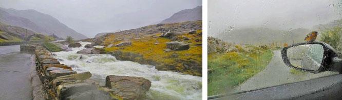 """Unberechenbare Naturgewalt und alles andere als rastlose Fauna. Ein typischer Tag in Snowdonia. Eine alte, walisische Weise: """"Hir yw pob ymaros"""" - all waiting is long. Wann hört der Regen auf?"""
