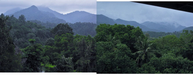 Beständig im Nebel: Auf dem malayischen Festland zwischen Kuala Lumpur und Penang, nach Besuch der Cameron Highlands, in der Nähe des Gunung Bubu (1.600 Meter). Eine großartige, nicht nur von Asiaten hochgeschätzten Bergsteiger- und Trekking-Region...