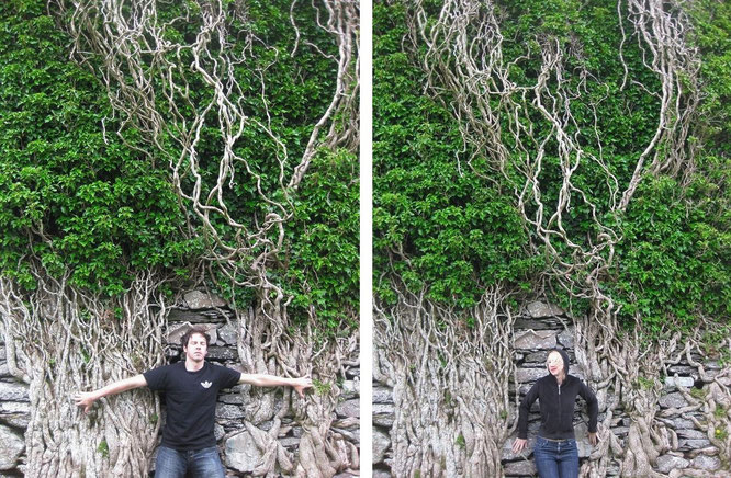 """Transformation among Hedera helix (Ivy) or The Unforgettable Fire - not Ballycarbery Castle, Kerry - but  Moydrum Castle, Athlone/Westmeath."""