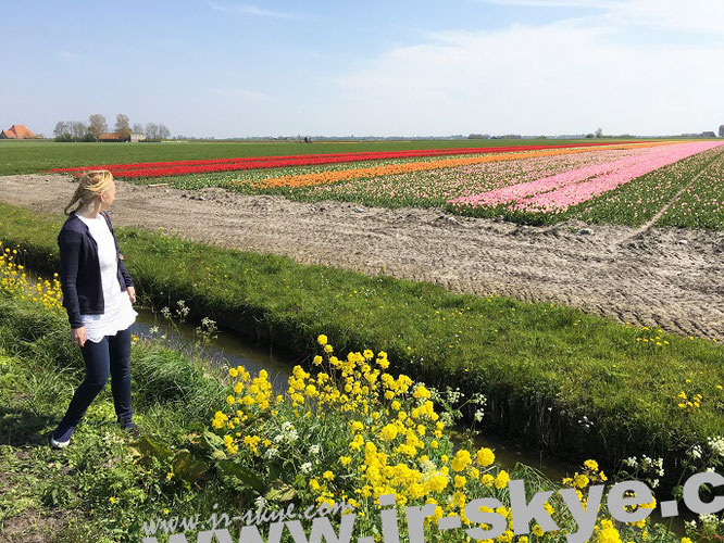 """""""Tulpen aus Holland"""" - Goodbye aus den Niederlanden!"""