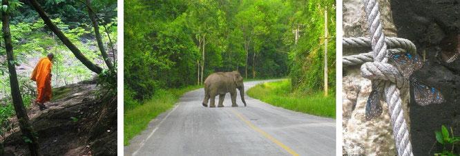 ...augenscheinlicher Buddhismus (im Kaeng Krachan Nationalpark, direkt an Pala U) und freilebende Elefanten, wenige Kilometer westlich von Hua Hin. Rechts: Schmetterlinge an Pala U...
