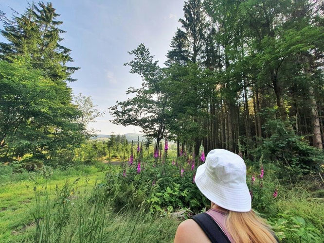 """...Hoherodskopf sublimely protrudes up and out of Vogelsberg, and you can enjoy a walk throug the """"lush tropical"""" flora and fauna, perhaps in the company of colourful butterflies..."""