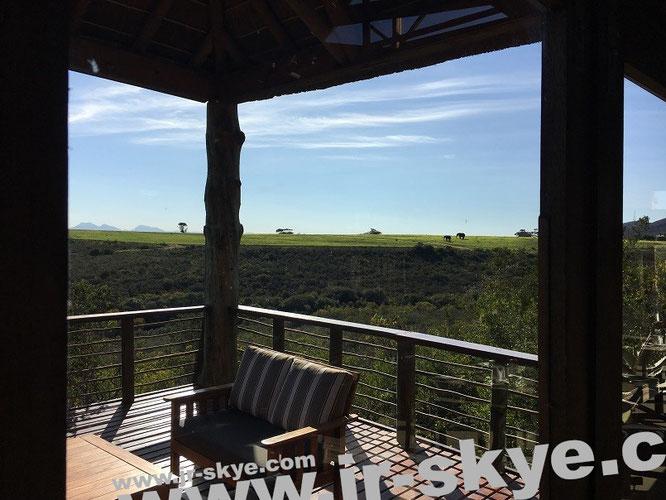 Großartige Perspektive: Elefanten zum Frühstück - selbstverständlich getrennt von Teller und Terrasse...