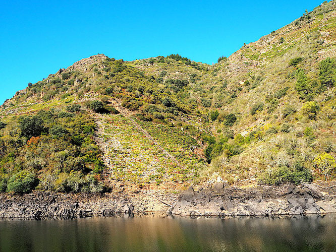 Weinanbau in der Ribeira Sacra ist harte Arbeit am steilen Hang, aber das Ergebnis kann sich schmecken lassen
