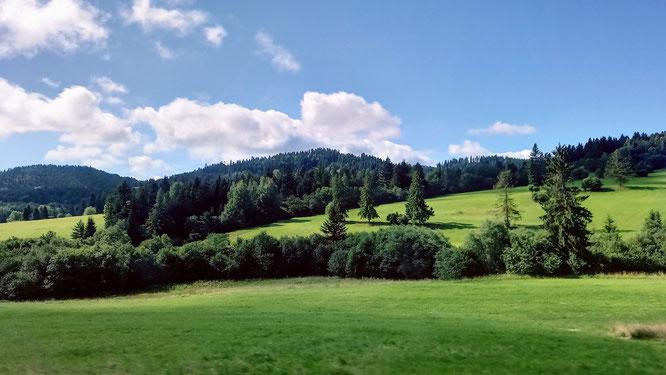 unbewirtschaftete Felder, umsäumt von Büschen und Bäumen