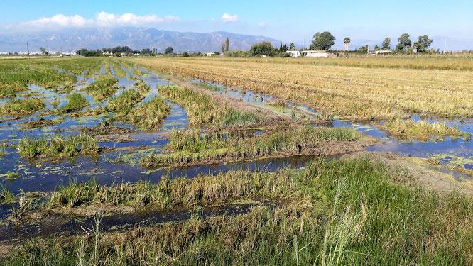 Radtour durch die Reisfelder