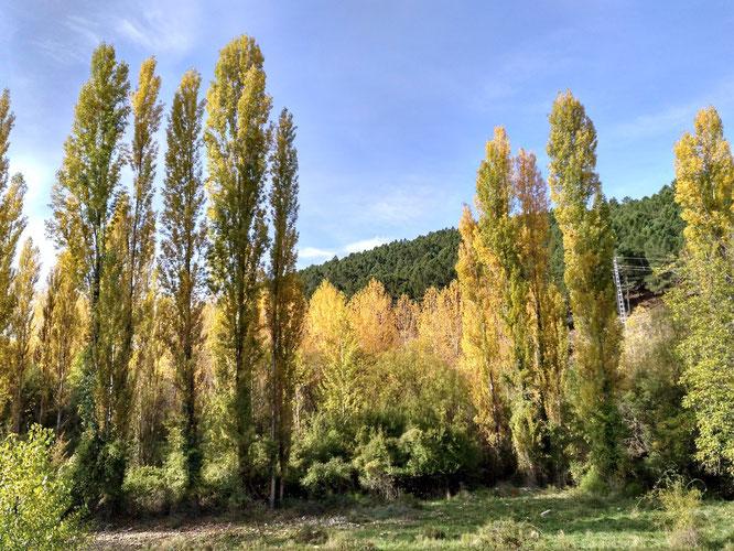schöner Blick vom Stellplatz auf die Farben des Herbstes