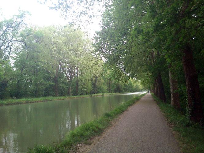 so schön ruhig, grün und ein bisschen diesig am Canal lateral du Garonne
