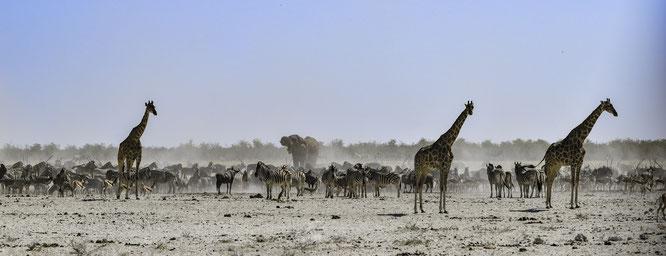 Namibia - Etosha National Park