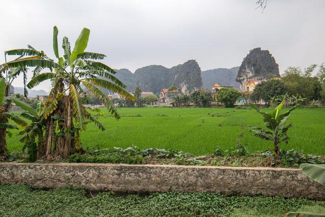 Reisfelder in Ninh Binh