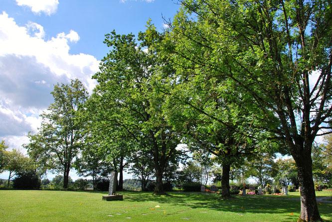 Bild: Westfriedhof Ravensburg Naturschutz Artenvielfalt