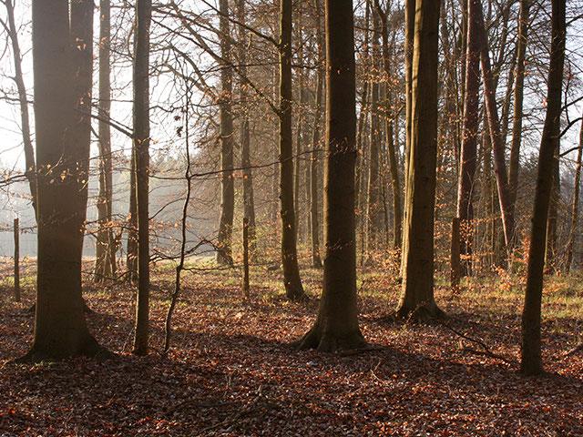 Bunter, herbstlicher Laubwald