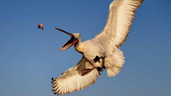 Was fliegt denn da? - Vogelbeobachtung für Anfänger