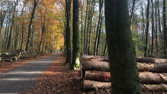 Wanderung durch den Hasseler Forst