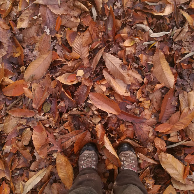 Balade d'hiver