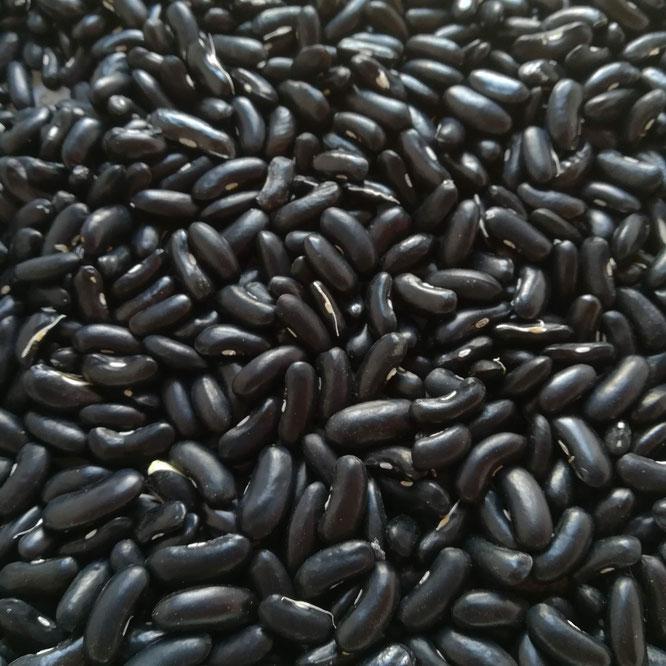 Graines de haricots vert variété Vespéral
