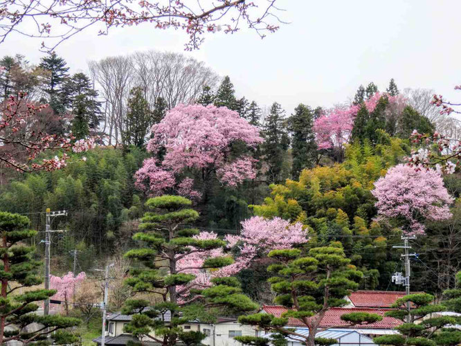 国指定史跡 二本松城(霞ヶ城公園)