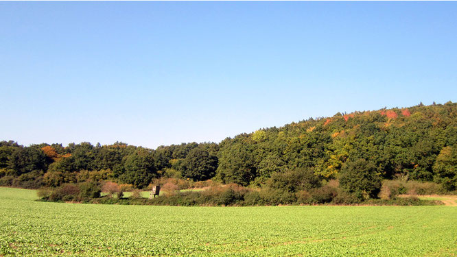 Herbstlandschaft bei Ettringen