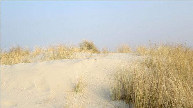 Dünen und Strand auf Spiekeroog