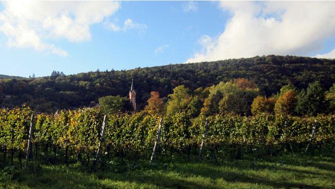 Weinlagen im Ortsteil Haardt