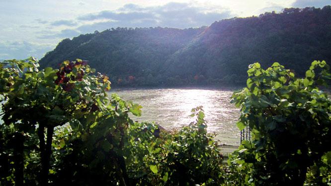 Sonnenschein am Rhein