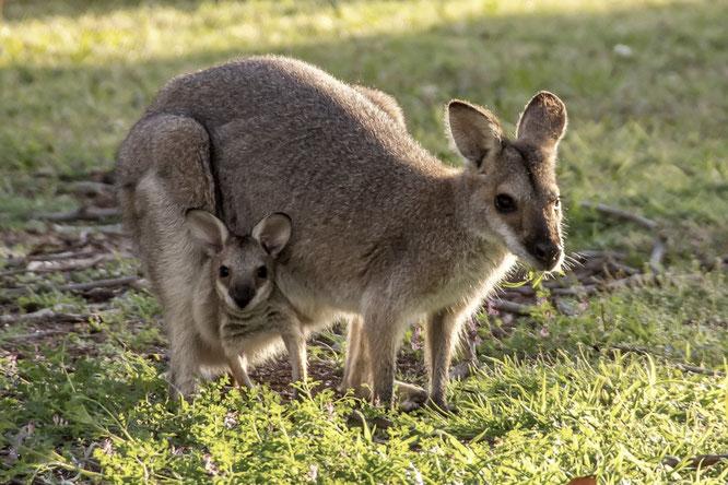 Geburt: Warum nicht wie beim Känguru???
