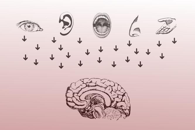 Unsere Sinne und unsere unbewusste Wahrnehmung