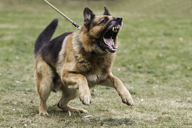 Aggressiver Hund, Hundetraining für Problemhunde