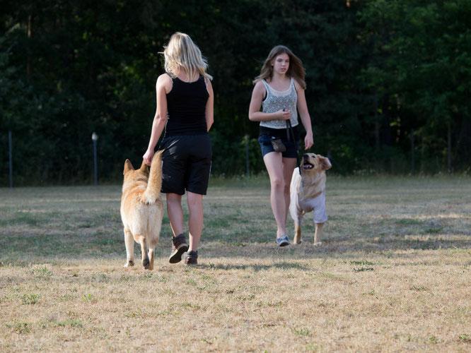 Verhaltensweisen von Hunden ändern und trainieren