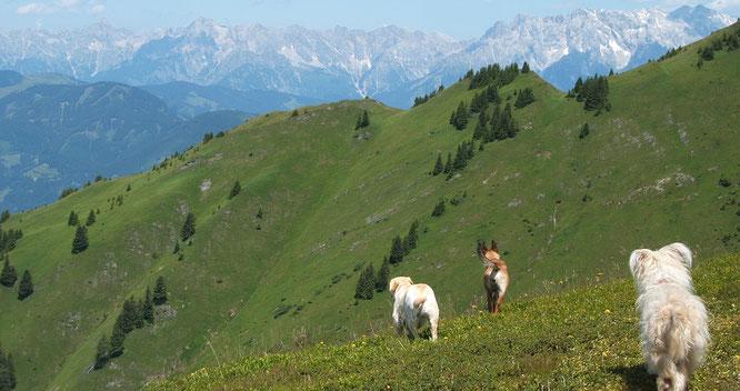 Hunde im Erzgebirge